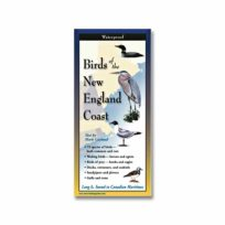 Birds of the New England Coast, available at The Audubon Shop, the best shop for bird watchers, Madison CT