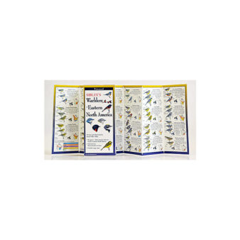 Folding Field Guide: Sibley's Guide to Warblers