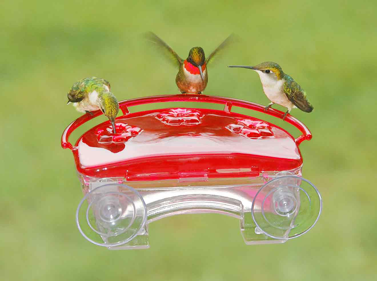 Aspects Jewelbox Hummingbird Feeder, available at The Audubon Shop, the best shop for bird watchers, Madison CT
